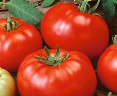Fresh organically grown tomatoes an