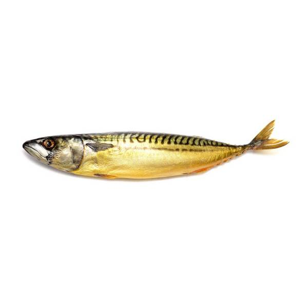 Mackerel-cold-smoked