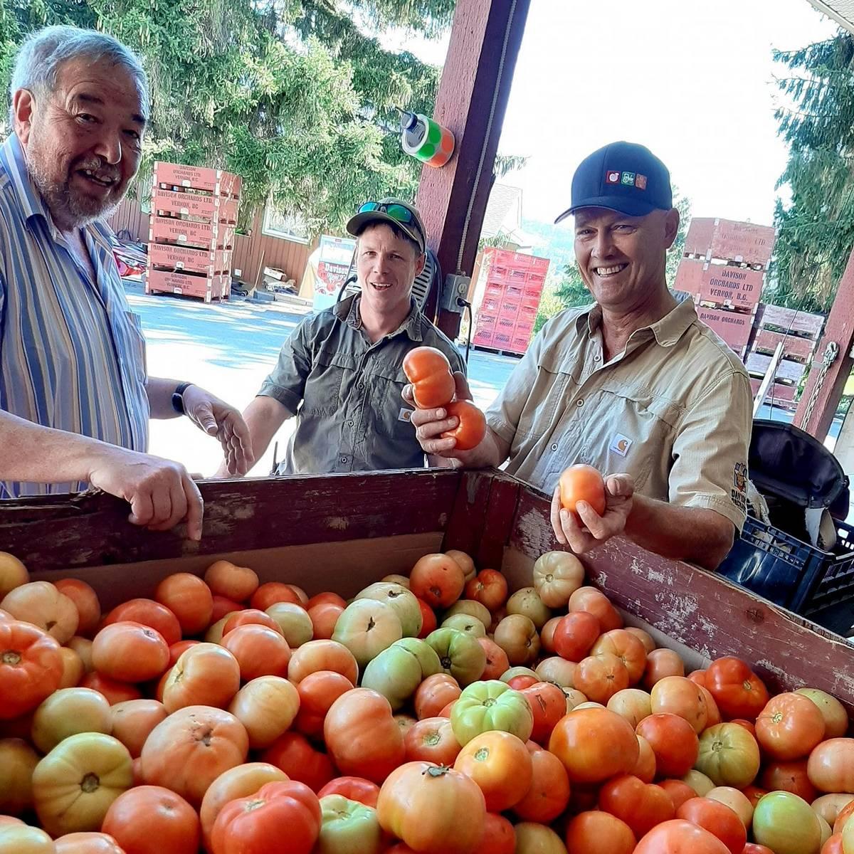 eurofood-okanagan-tomatoes-2020-crop